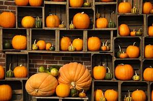 Free Desktop Pumpkin Wallpapers | PixelsTalk.Net