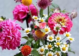 Blumen Im Juli : august hochzeit blumen fotos ~ Lizthompson.info Haus und Dekorationen
