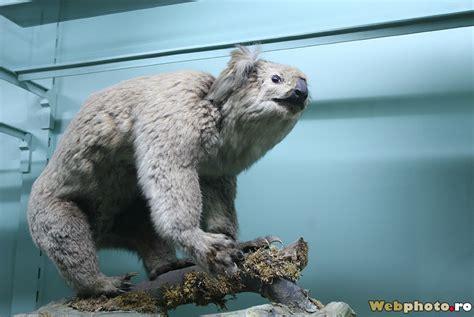 prehistoric animals  extinct civilizations