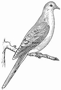 File:Mourning Dove 2 (PSF).png - The Work of God's Children