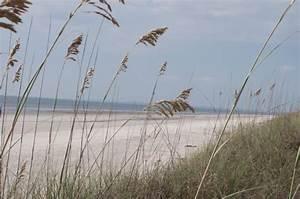 Beach Monitoring   Sapelo Island NERR