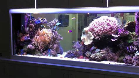 210 Gallon Reef Tank In Hd Youtube