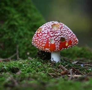 Pilze Wachsen Kellerwand : pilze pilze sind nach tieren das zweitgr te ~ Lizthompson.info Haus und Dekorationen