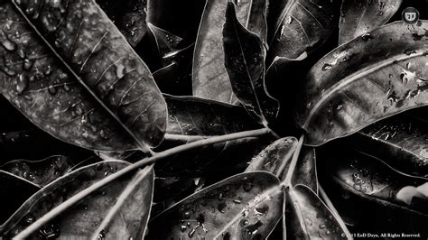 Abstract Cool Black And White Backgrounds by 70 Hd Black And White Wallpapers For Free