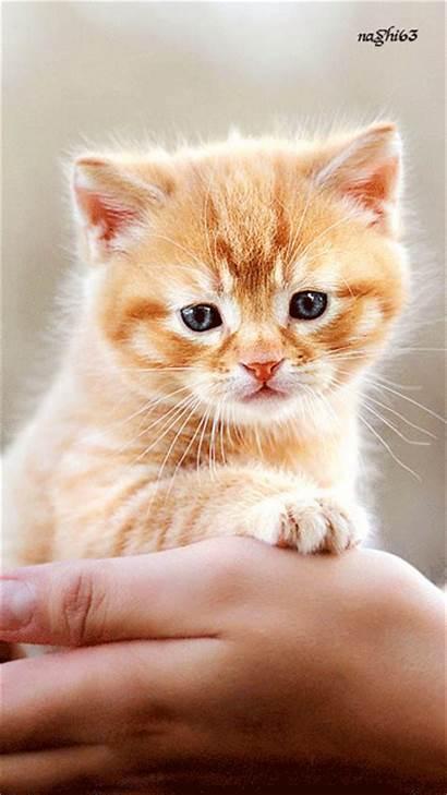 Cat Cats Kitty Deviantart Sad Dogs Animation