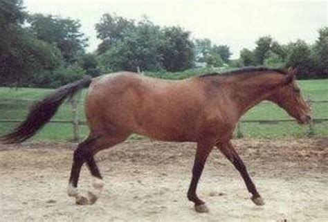 horses taxes horse write lice average treatment owning monthly cost ehow