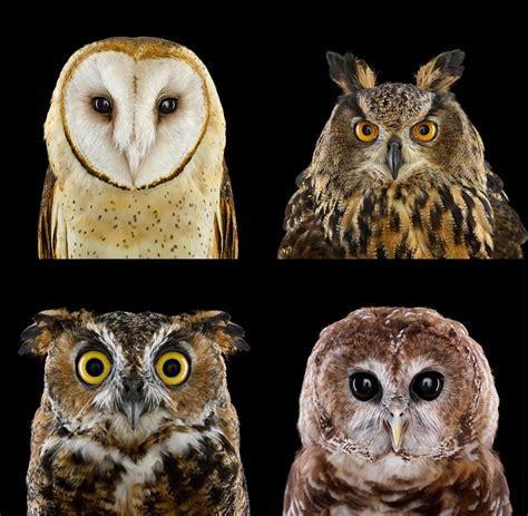 birds whos  learn    beautiful