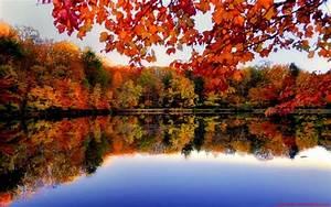 River Side Autumn Forest Desktop Background