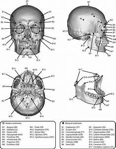 Skull Diagram Unlabeled  U2014 Daytonva150