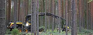 How To Become A Timber Harvesting Operator