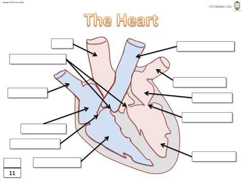 diagram label diagram worksheet answers
