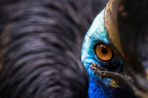 photographs selected  national geographic