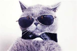 cool for cats be a cool cat