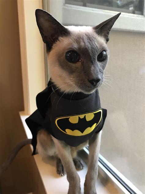 Batman Cat Album On Imgur