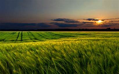 Sunset Field Wheat Wallpapers Spring Cornfield Nature