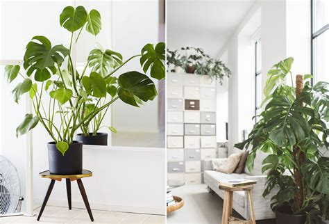 plante pour le bureau pour la nouvelle decoration de mon bureau