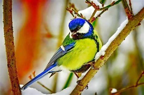 blue and green bird colourful birds pinterest