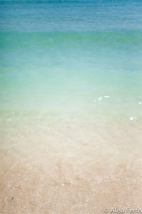 south beach miami florida blackbird foto