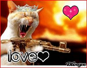 cat funny gun image search results