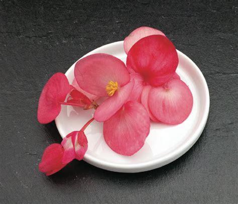 plante de cuisine catalogue marius auda fleurs comestibles