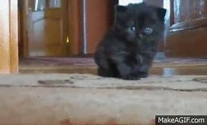 Cute Kitten GIF - Find & Share on GIPHY