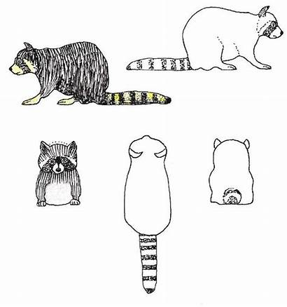 Carving Wood Patterns Pattern Whittling Plans Racoon