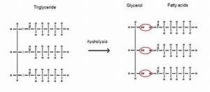 Glycerol - Molecule Of The Month