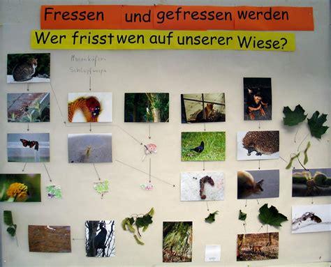 Welches Tier Frisst Pilze Im Garten by Geo Projekt 2006 2 Forscher Tag