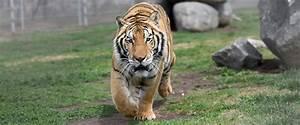 Exotic Animal & Big Cat Sanctuary In California   Lions ...