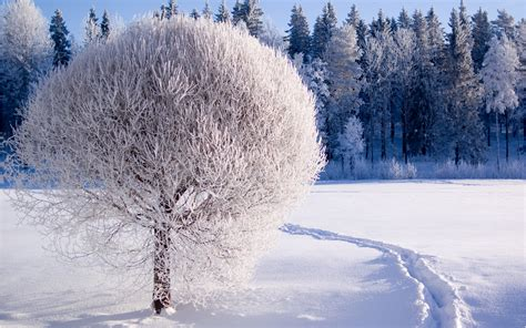 Most Beautiful Winter Wallpapers