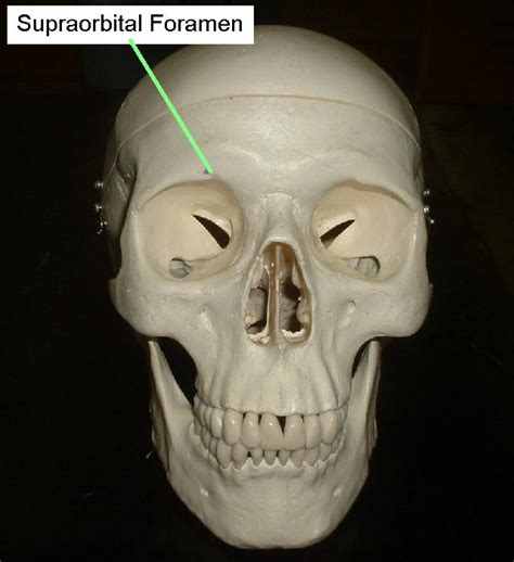 Human Anatomy Lab