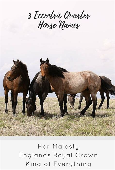 names horse quarter foal horses american fun eccentric need animals aqha database taken funny equestrian camel cowboys association