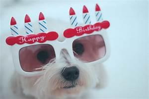 Cute Happy 21st Birthday Wishes | WishesGreeting