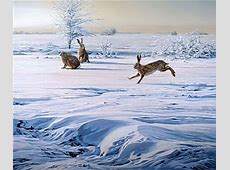 Martin Ridley Wildlife and Landscape Paintings Martin