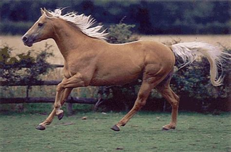 horses fastest horse quarter animals american palomino races dream speed gelding most le da beauty achieve 5mph because its fa