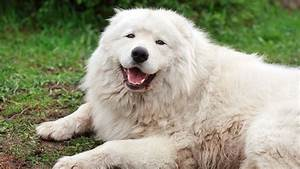 The Maremma Effect - National Geographic