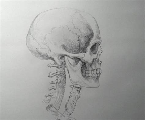 How Draw Skull Drawing Academy Video Lesson Art