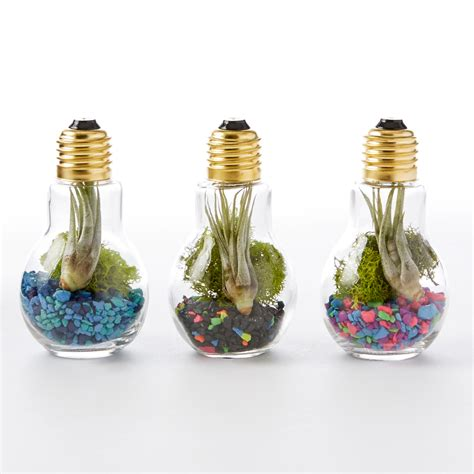 A Bright Home To Give A Family A Taste Of The by Diy Light Bulb Terrarium Adorable Home