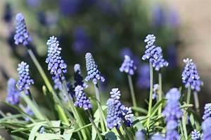 Grün Auf Englisch : kostenlose foto landschaft gras blume lila bl hen fr hling gr n kraut botanik garten ~ Orissabook.com Haus und Dekorationen