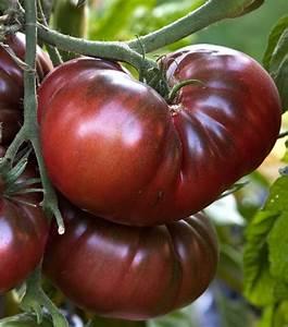 Tomate Noir De Crimée : tomates noire de crim e country living pinterest ~ Dailycaller-alerts.com Idées de Décoration