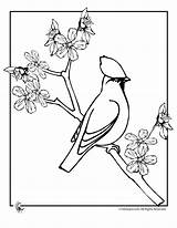 Blossom Coloring Apple Cherry Branch Line Drawing Bird Pages Sheet Adults Tree Colouring Japan Getdrawings Printer Send Button Special Wickedbabesblog sketch template
