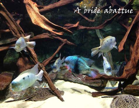 aquarium porte doree gratuit 28 images les petits pois sont les yeux en amande photo 3