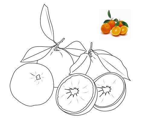 mewarnai gambar buah buahan jeruk
