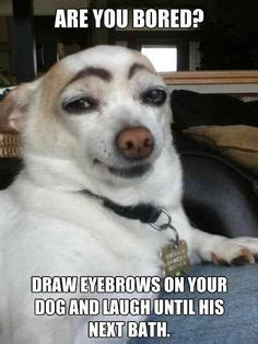 animals wearing makeup images funny animal