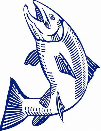 Salmon Clipart Pacific Jumping Clipground