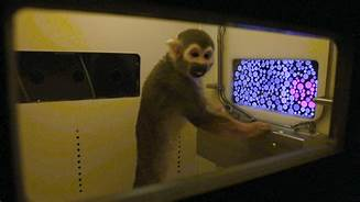 Scientists cured color blindness in monkeys using gene therapy…