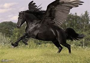 Real Pegasus Found | www.pixshark.com - Images Galleries ...