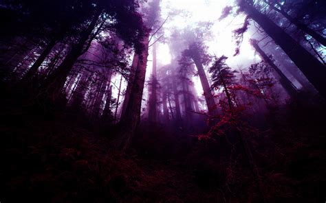 forest fantasy art photo manipulation purple trees