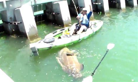 grouper goliath kayak gearjunkie boat fisherman