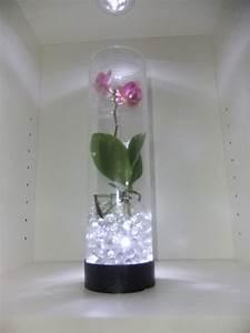 Sukkulenten Im Glas Pflanzen : orchideen im glas dekorieren nxsone45 ~ Eleganceandgraceweddings.com Haus und Dekorationen
